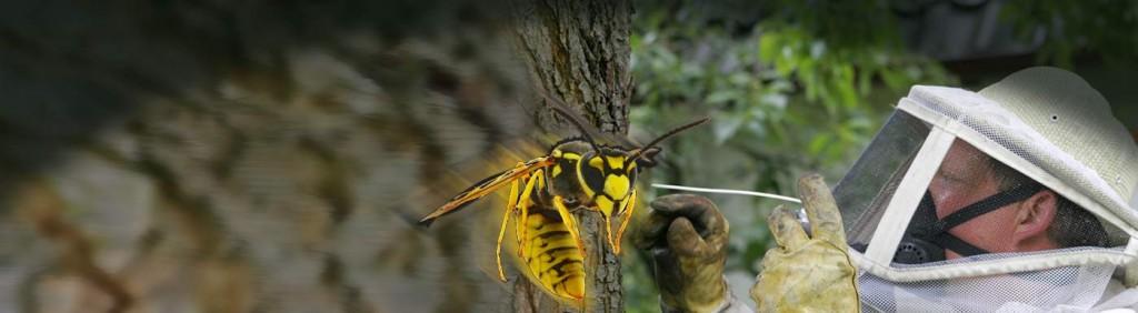 Wespennest entfernen im Schwarzwald